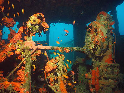 Victory Wreck Dive in North Male - Maldives Report and Photos copyright Ken Knezick, Island Dreams