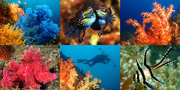 Lembeh Bunaken Combo - photo montage copyright Ken Knezick, Island Dreams Travel