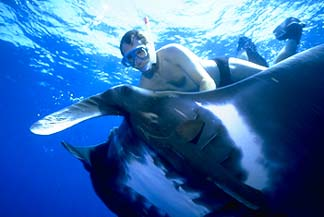 Man and Manta Ray