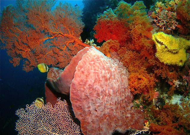 Wakatobi Wide-Angle - copyright Phil Sokol