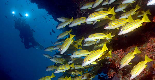 Maldives scuba diving photography - Maldives Report and Photos copyright Ken Knezick, Island Dreams