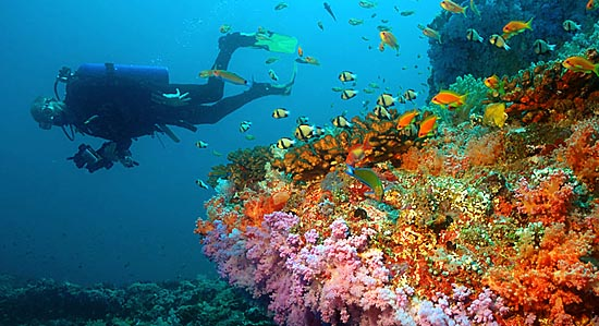 Underwater Reef Scene in the Maldives - Maldives Report and Photos copyright Ken Knezick, Island Dreams